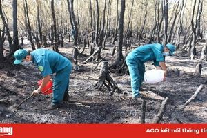 Bảo vệ rừng qua thời kỳ nguy hiểm
