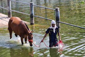 Virus mới giết 42 ngựa đua ở Korat