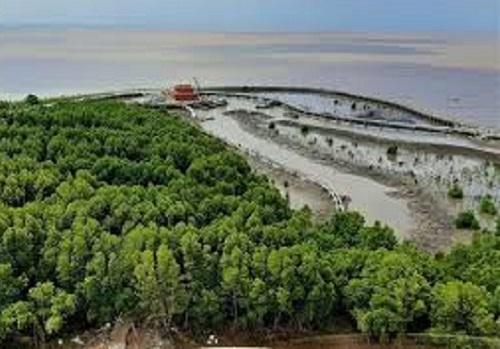 Thực hư thông tin vận động 'góp tiền trồng rừng' ở Cà Mau