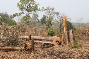 Gia Lai: Khởi tố 3 vụ phá rừng để điều tra