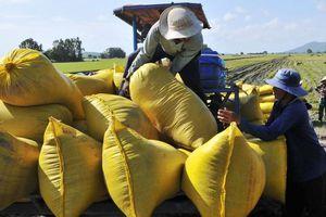 Sản xuất lúa năm 2020 ở ĐBSCL: Nỗ lực đạt thắng lợi