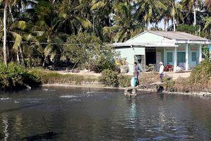 Người nuôi cá lóc điêu đứng vì hạn mặn