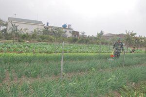 Ban CHQS thị xã Đông Triều đảm bảo nguồn thực phẩm sạch cho bộ đội