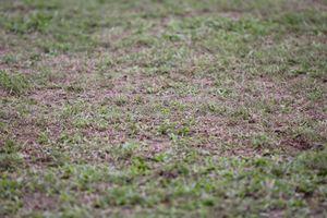 Mặt cỏ sân Vinh chuẩn bị được cải tạo