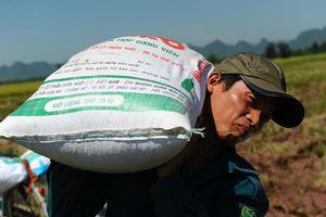 Bộ Công Thương đề xuất cho xuất khẩu gạo trở lại
