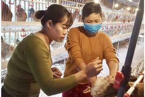 Bắc Kạn chủ động ngăn chặn dịch bệnh trên đàn vật nuôi