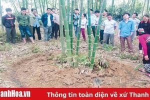 Thực hiện tốt chính sách hỗ trợ góp phần phát triển bền vững rừng luồng