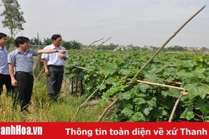 Hiệu quả chương trình cung ứng phân bón trả chậm cho nông dân