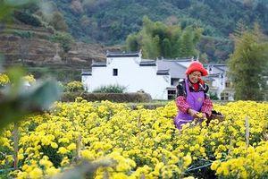 Ngành du lịch Trung Quốc nỗ lực khôi phục hoạt động