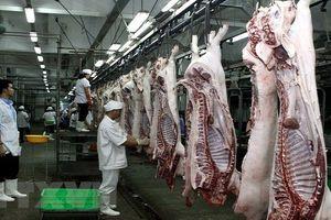 Lợn hơi 70.000 đồng/kg, người tiêu dùng vẫn phải mua thịt lợn giá cao?