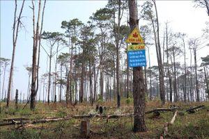 Đắk Nông: Sau 4 năm, mất hơn 100 ha rừng thông tại xã Quảng Sơn