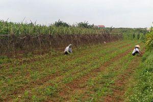 Dự án sân golf quốc tế Thuận Thành, Bắc Ninh: Lo ngại ô nhiễm nguồn nước sông Đuống