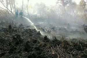 Kịp thời dập tắt cháy rừng tại Cà Mau