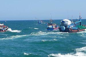 Khẩn trương xác minh việc tàu cá ngư dân bị tông chìm ở Hoàng Sa