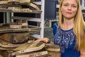 'Bóng ma' trong cây thông cổ tiết lộ bí ẩn đế chế 3.600 tuổi