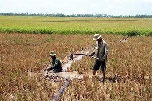 Hạn mặn tiếp tục gay gắt, hỗ trợ khẩn cho các địa phương
