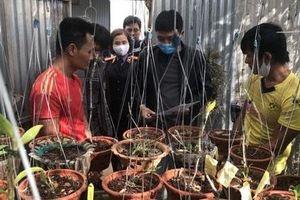 Chuyên án truy lùng băng trộm hoa lan giá tiền tỷ