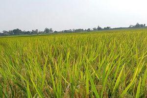 Kiểm soát chặt sản xuất giống trong nông nghiệp