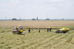 Sản xuất nông nghiệp tiếp tục phát triển
