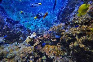 Sinh vật biển bảo vệ chúng ta khỏi hàng triệu virus