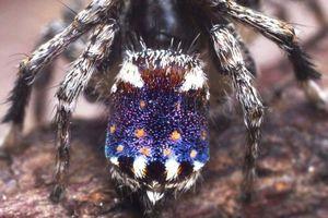 Loài nhện màu sắc sặc sỡ được đặt tên theo bức tranh nổi tiếng của danh họa Van Gogh