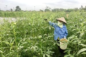 Ảnh hưởng dịch Covid-19, tổng giá trị sản xuất nông nghiệp Hà Nội giảm 1,17%