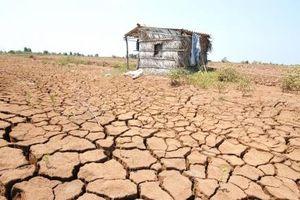 Hạn mặn kỷ lục ở ĐBSCL: Lối đi nào cho một vùng đất?