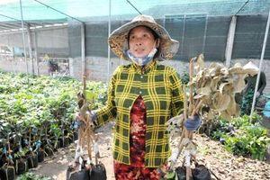 Các cơ sở cây giống bị thiệt hại nặng vì hạn mặn