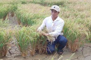 Hơn 60.000 ha cây trồng ở Tây Nguyên, Trung Bộ bị đe dọa bởi khô hạn
