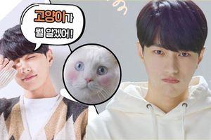 'Meow, Chàng Trai Bí Ẩn' - Khi 'boss' hóa thành mỹ nam để chống ế cho 'sen'