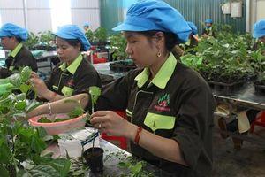 Doanh nghiệp ngành nông nghiệp vượt khó sản xuất trong dịch bệnh