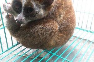 Cảnh báo mối nguy hại từ động vật hoang dã với sức khỏe con người