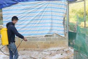 Tuyên Quang: Phát hiện ổ cúm gia cầm đầu tiên
