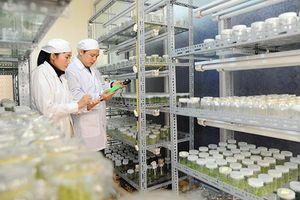 An Giang đẩy mạnh sản xuất giống lúa