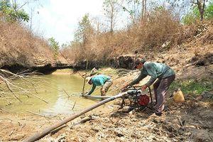 'Rụng' tiền tỷ vì khô hạn