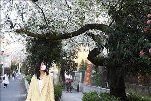 Số ca nhiễm Covid-19 tại Nhật Bản tăng mạnh trở lại