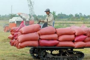 Kiên Giang: Các doanh nghiệp đang tồn kho trên 134 ngàn tấn lúa, gạo