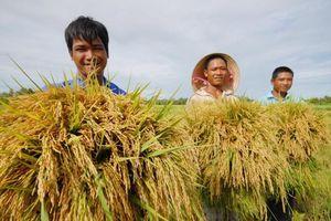 Lo nguồn cung gạo dịp COVID-19, cấp bách bảo vệ 1,1 triệu ha lúa Đông Xuân