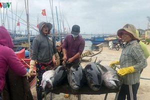 Giá cá ngừ đại dương giảm mạnh