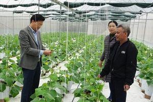 Nguyên Thái đẩy mạnh phát triển nông sản chủ lực