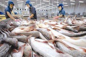 Những tín hiệu tích cực từ xuất khẩu cá tra