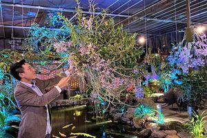 Mỗi ngày một loại Phong lan: Hoàng Thảo Xoắn, Dendrobium tortile Lindl