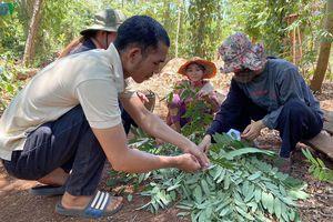 Kiếm tiền triệu mỗi ngày nhờ đặc sản 'tôm rừng' Tây Nguyên