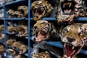 Sử dụng thông tin tài chính để dẹp bỏ nạn buôn bán động vật hoang dã trái phép
