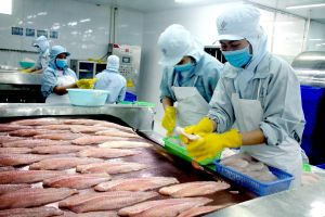 Ngành cá tra chờ sức bật của doanh nghiệp dẫn đầu