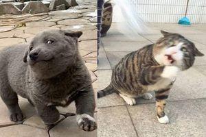 Dúi và những thú cưng nổi danh trên mạng nhờ biểu cảm diễn sâu