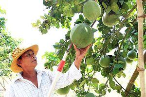 Diện mạo mới trên những vùng 'đất thép' ở Ninh Thuận