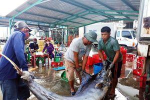 Quảng Ngãi: Ảnh hưởng Covid-19, giá cá giảm từ 50 - 70%