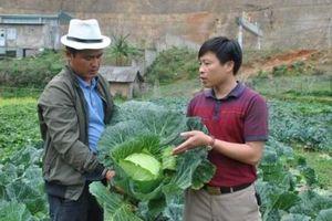 Sản xuất rau trái vụ thu tiền tỷ