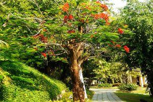 Ngắm cây trên phố